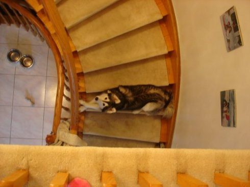 She's not allowed to go upstairs, but she'll try to sneak up one stair at a time. You can usually tell how badly she wants you to come downstairs by how far she's gone up the stairs. This is about 3/10 urgency. Credit: DONG_OF_JUSTICE /  Imgur
